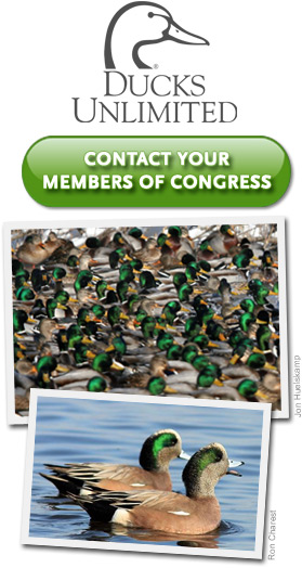 Take Action for the Ducks!